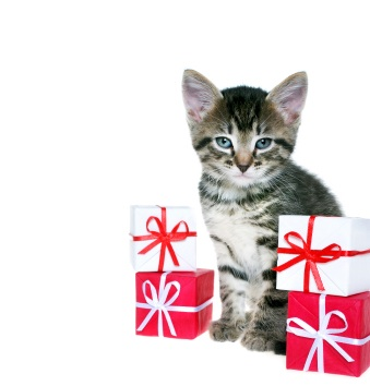 Presents for Cat Owners